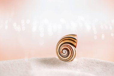 stripped  sea shell on white sand
