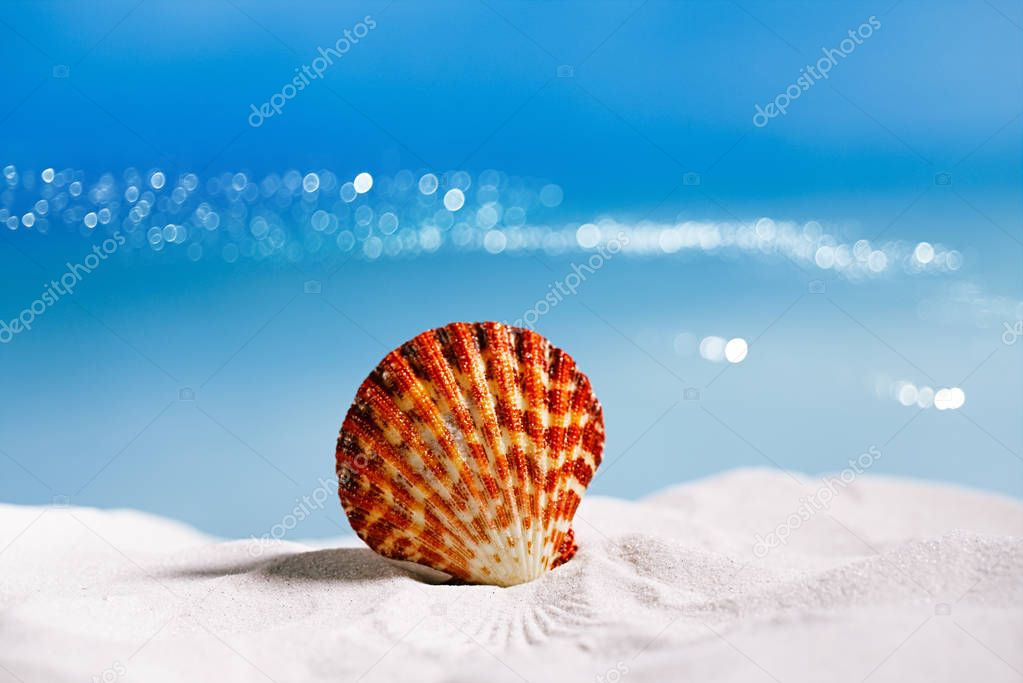 tropical seashell on beach