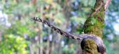 Fotografie costa rica wildtiere natur tiere