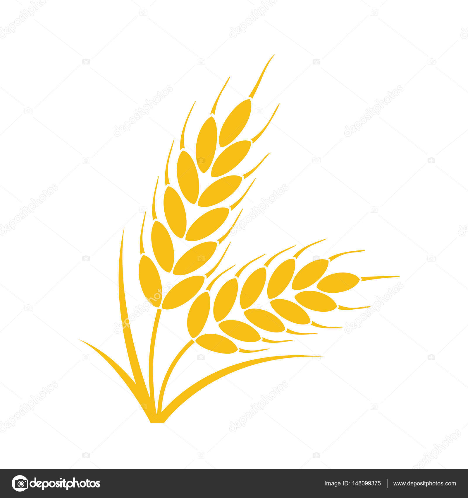 Vector Bunch Of Wheat Or Rye Ears With Whole Grain Stock Vector