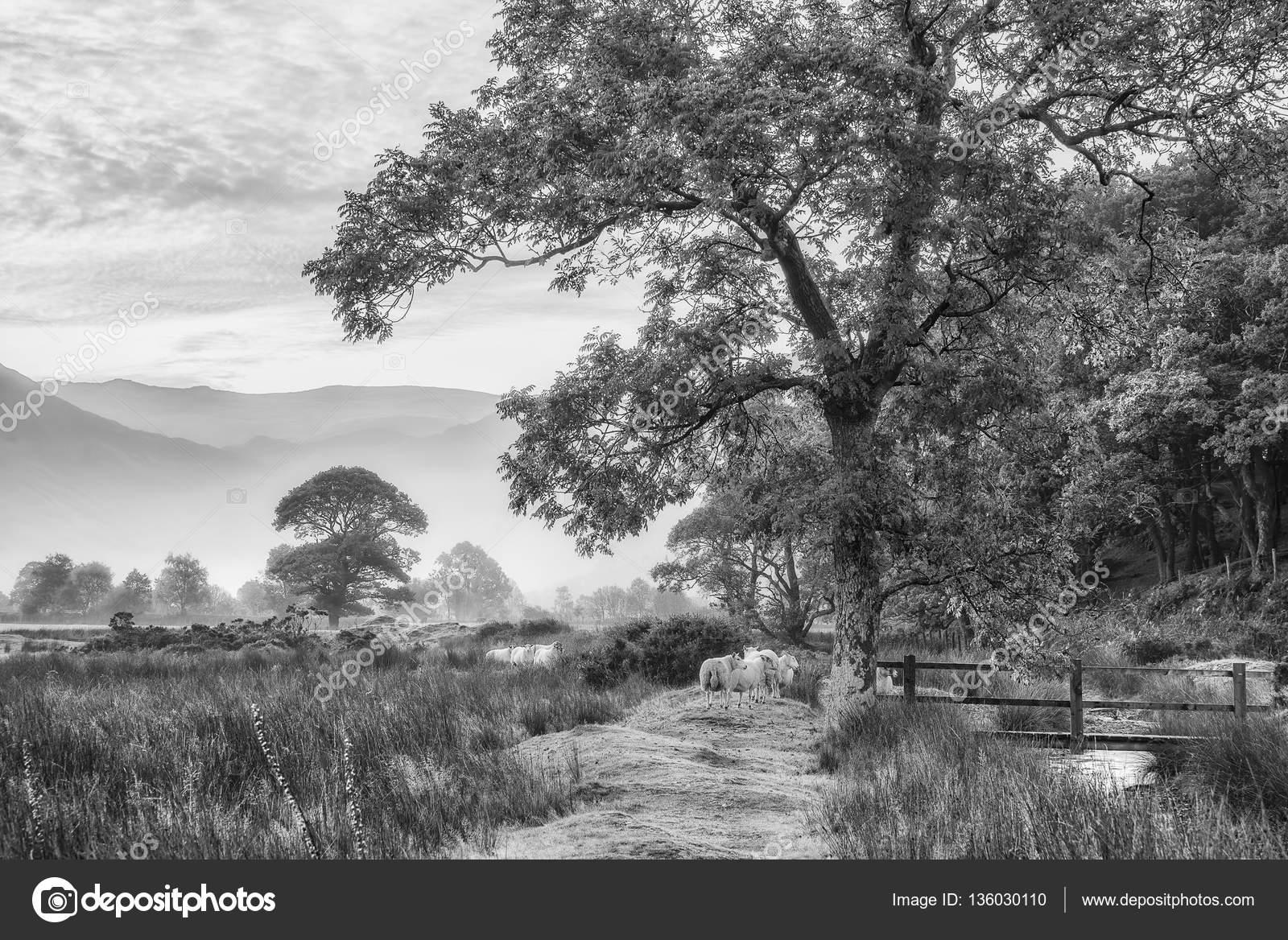 Bello paesaggio bianco e nero nebbioso nebbioso autunno for Disegni bianco e nero paesaggi