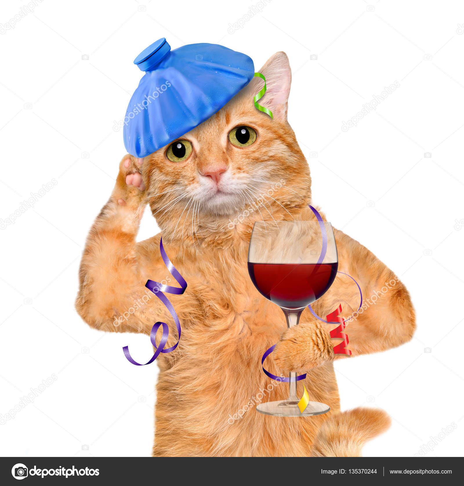 katze mit einem kater und kopfschmerzen ist ein glas wein eisbeutel auf den kopf halten. Black Bedroom Furniture Sets. Home Design Ideas