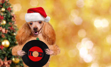 Cinemagraph - Music headphone vinyl record dog . Christmas. Motion Photo.