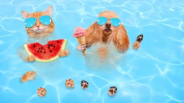 Cinemagraph - kočka a pes nosí sluneční brýle relaxační v moři .