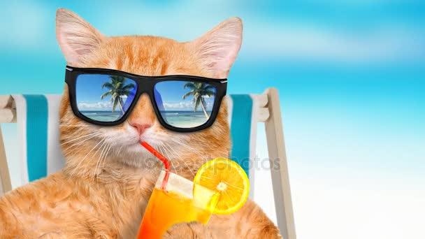 Gato De Relajantes En La Sol Gafas Cinemagraph Con Sentarse OyNwmn0Pv8