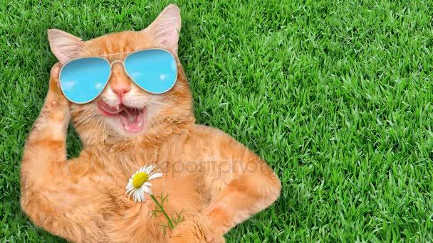 Cinemagraph - macska pihen a fűben napszemüveget visel. Indítványt fotó.