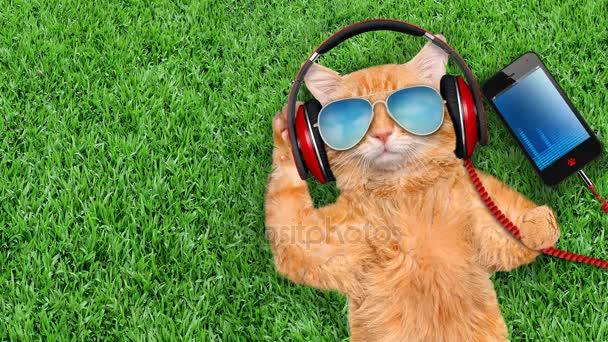 Cinemagraph - Cat sluchátka nosí sluneční brýle v trávě .