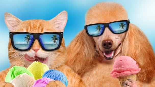 Cinemagraph - a macska és a kutya, pihentető tengeri háttérben napszemüveget visel.