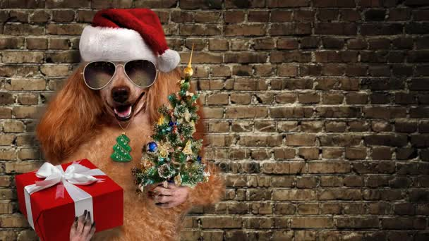 Cinemagraph - pes v červená vánoční čepice s darem a strom.