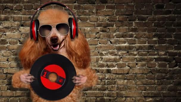 Cinemagraph - zene fejhallgató vinil rekord kutya.