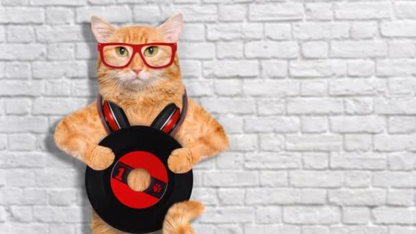 Cinemagraph - zene fejhallgató vinil rekord macska. Indítványt fotó.
