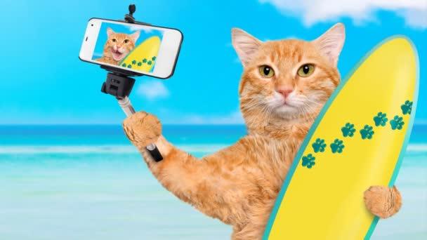 Cinemagramm - Surfer Katze am Strand unter einem Selfie zusammen mit einem smartphone