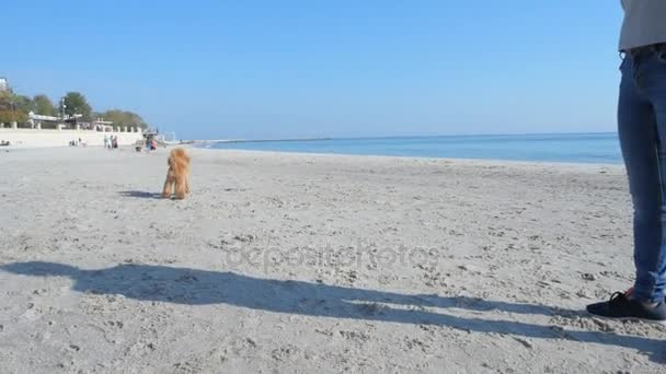 Glücklicher Hund am Strand rennt und holt Ball.