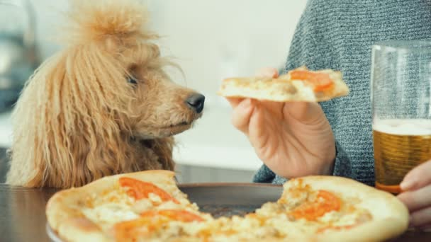 kinemagraph - Hund beim Anblick von Futter. Spielfilm. Frau isst Pitzza und trinkt Bier. Filtereffekt Farbe Stil.