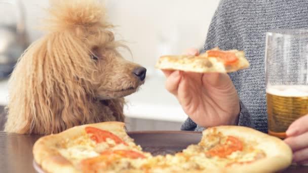 kinemagraph - Hund beim Anblick von Futter. Spielfilm. Frau isst Pitzza und trinkt Bier.