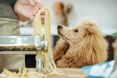 Woman's hands use a pasta cutting machine. The dog looks at the woman.