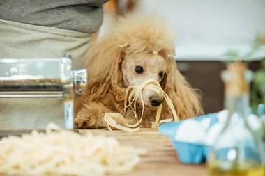 Young woman with her dog doing a handmade pasta .