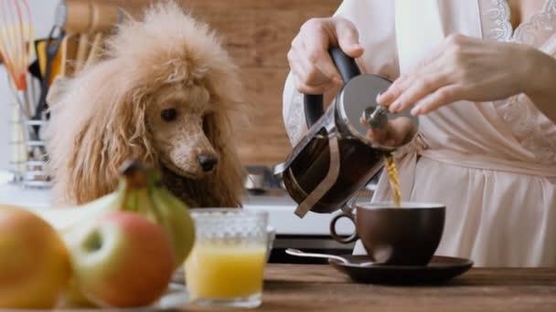 Ženská ruka nalil horký čaj z konvice v poháru. Pes se dívá na ženu.