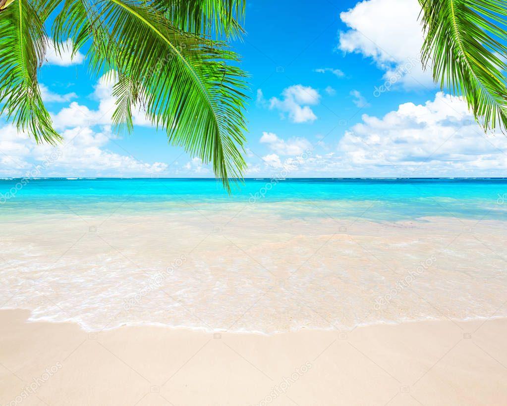 Фотообои Coconut palm trees and blue sky and sea