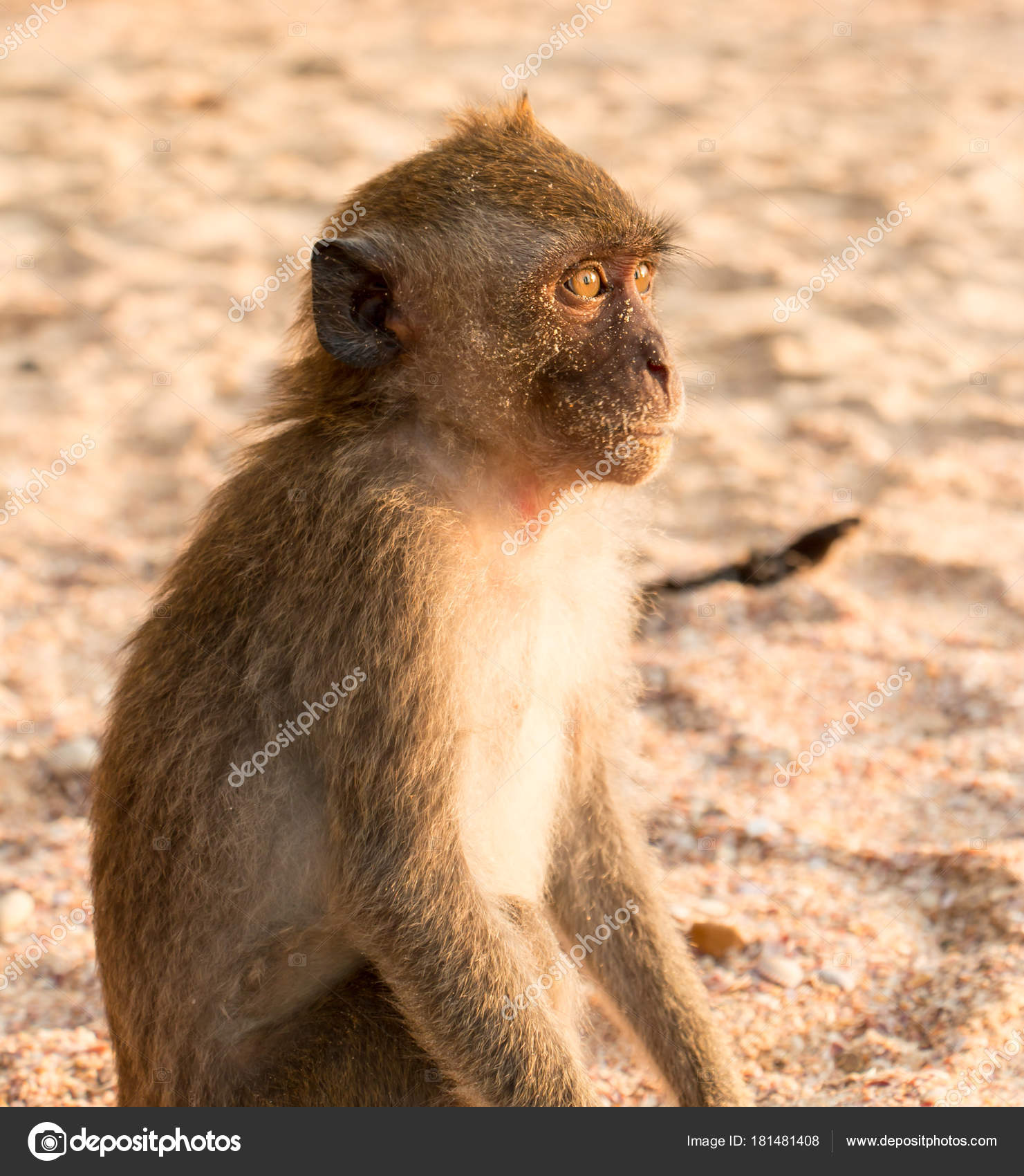 Фото обезьян на пляже 35