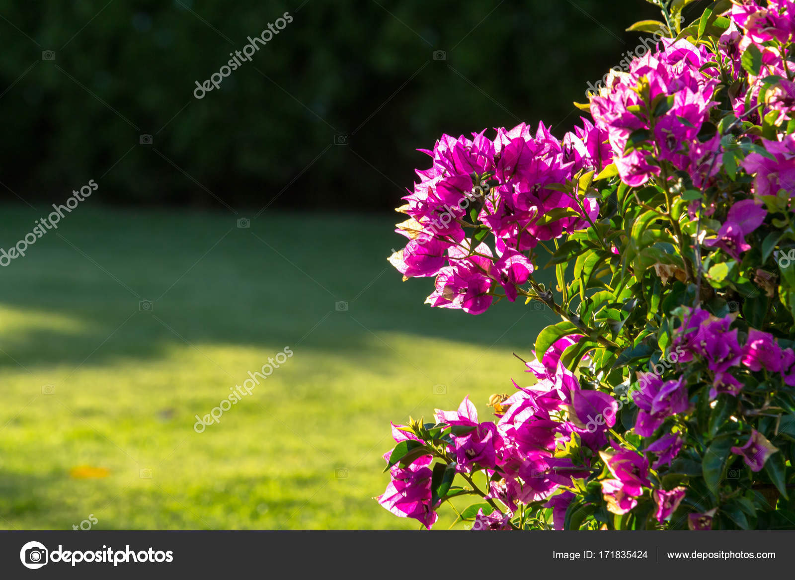 Little pink flowers on a bush close up stock photo cahkt 171835424 little pink flowers on a bush close up stock photo mightylinksfo