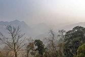 Alcuni alberi e grandi montagne sotto cielo nebbioso