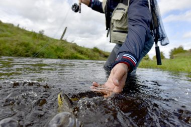 Fly-fisherman catching  trout