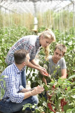 people attending apprenticeship in greenhouse