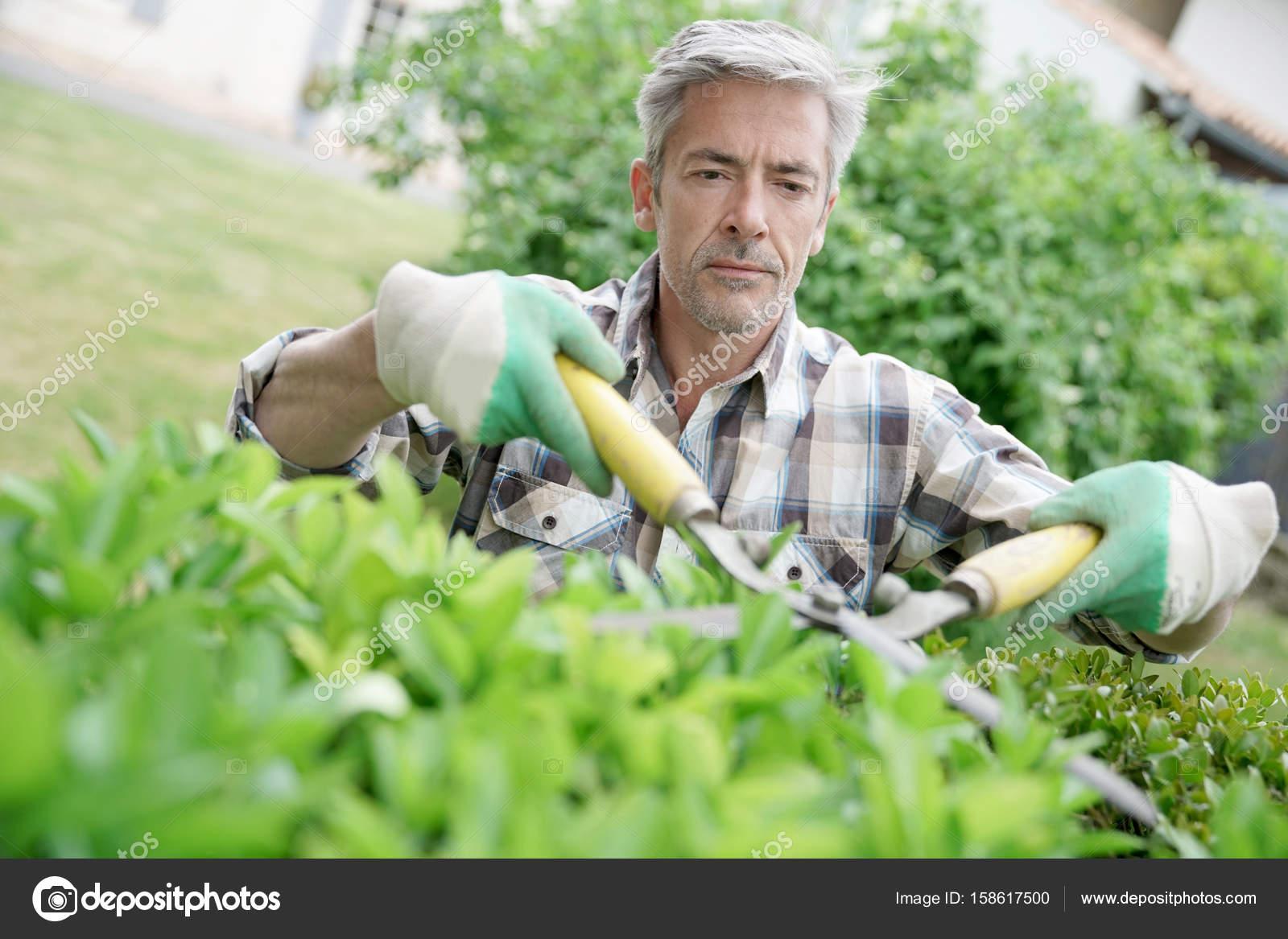 Homme dans le jardin de tailler les haies photographie - Tailler les haies ...