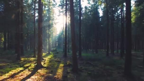Video B168733354