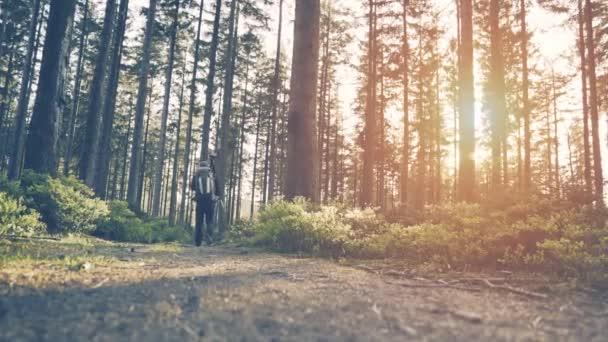 Természetjáró túrázás az erdőben a naplemente.