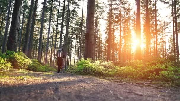 Tramp Turistika v lese při západu slunce. Tramp děsivý pohled při západu slunce v krásném lese německy Schwarzwald krajina.