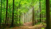 Tichý les na jaře s krásnými jasnými slunečními paprsky - toulavý chtíč