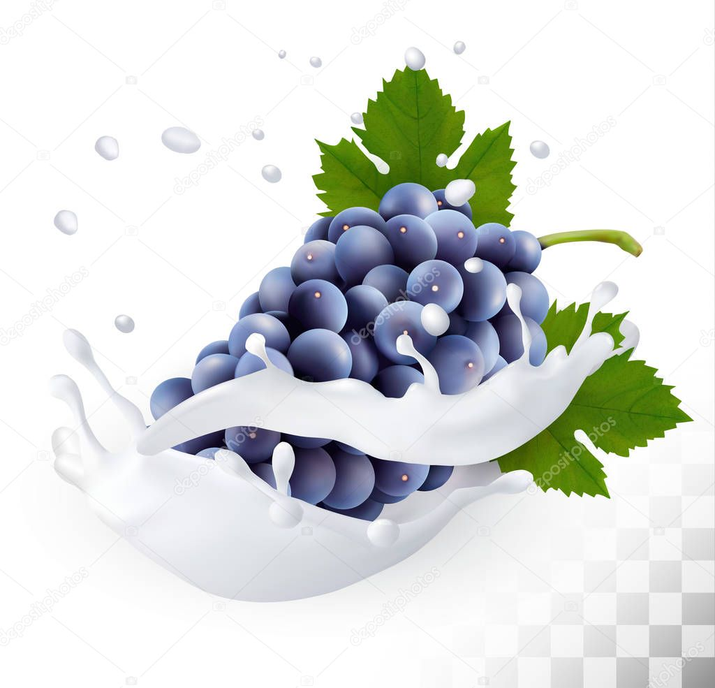 Blue grapes in a milk splash on a transparent background. Vector