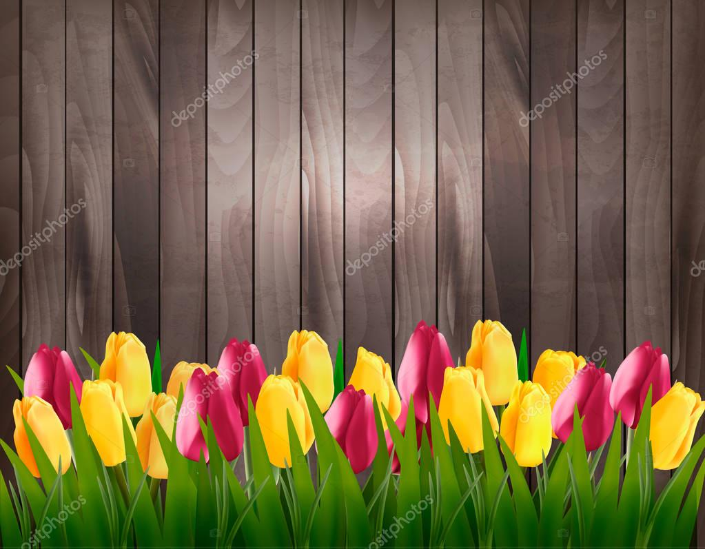 Nature spring background with colorful tulips on wooden sign. Ve