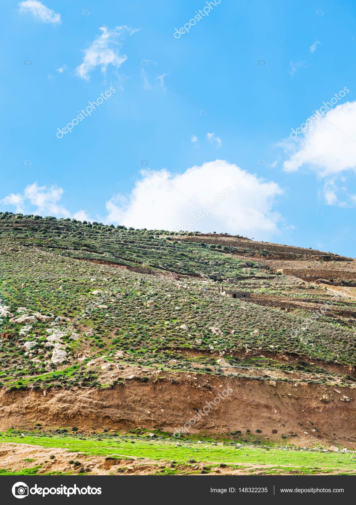 pendio di collina con giardini terrazzati in Giordania — Foto Stock ...