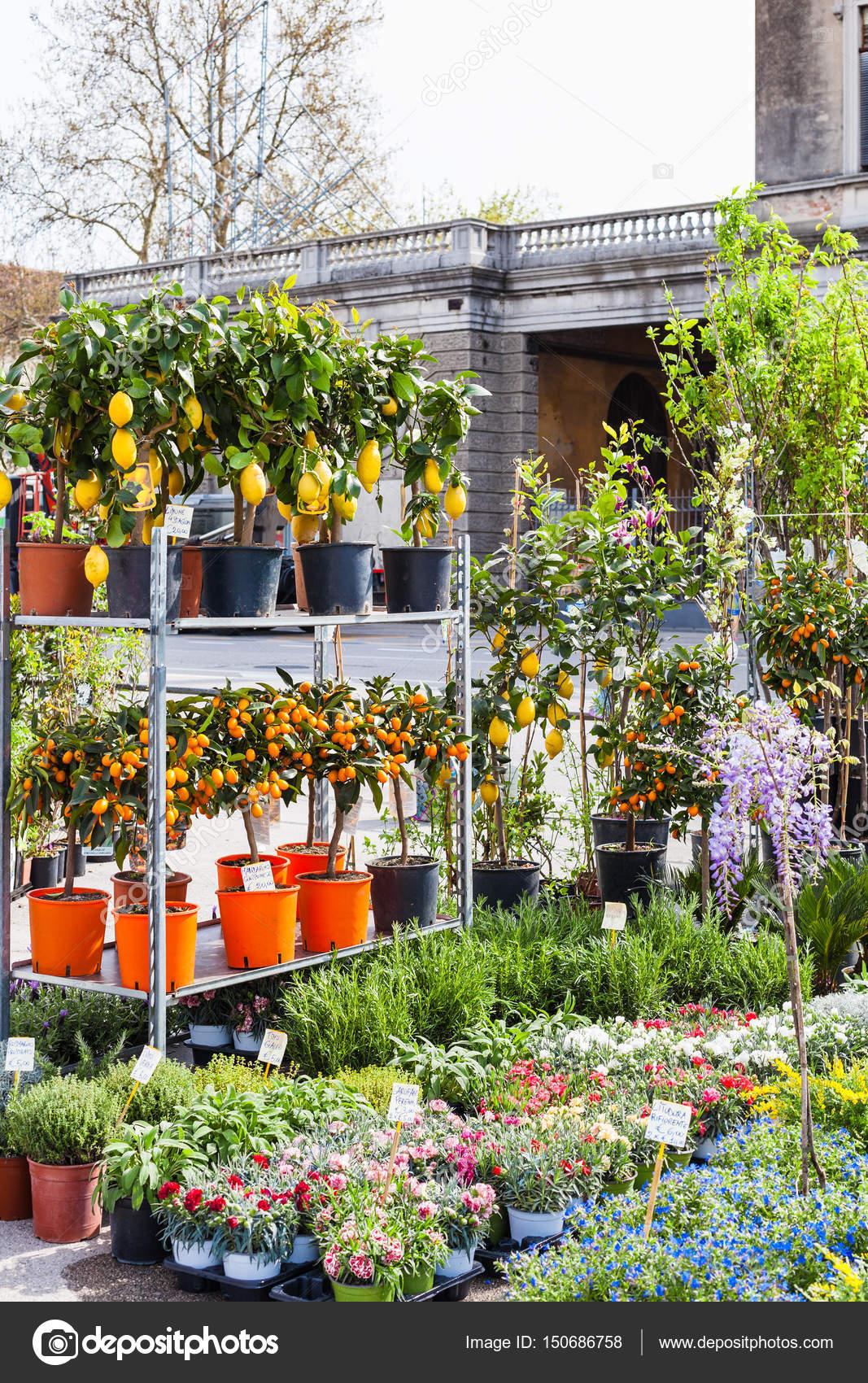 decorative trees on garden market in Padua — Stock Photo © vvoennyy ...