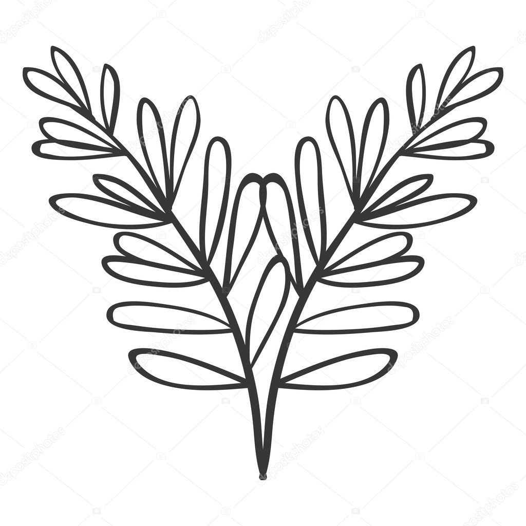 pair of branches with oval leaves