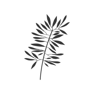 gray scale branch olive with leaves