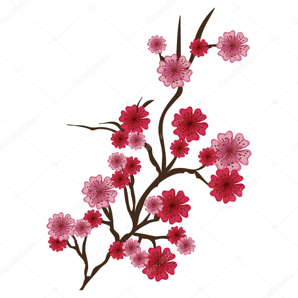cherry blossom icon iimage