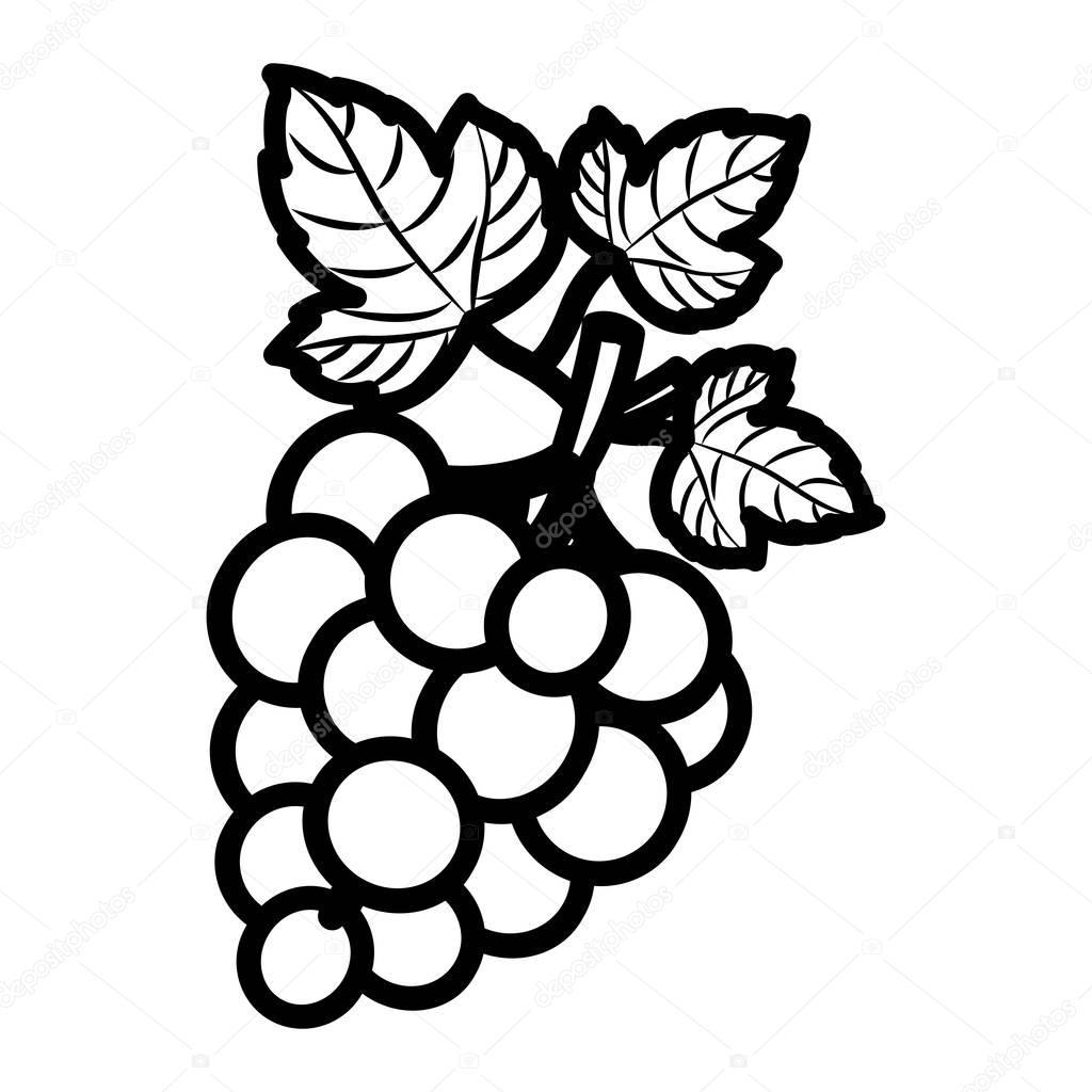 Desenho de frutas uvas isolado — Vetores de Stock ...