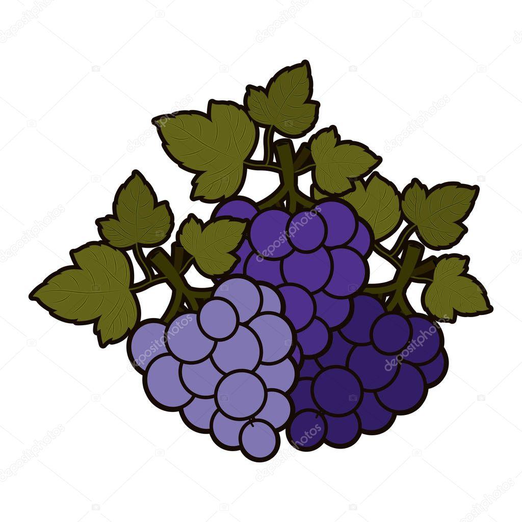 孤立的葡萄果实的设计 — 图库矢量图像© grgroupstock #133504002