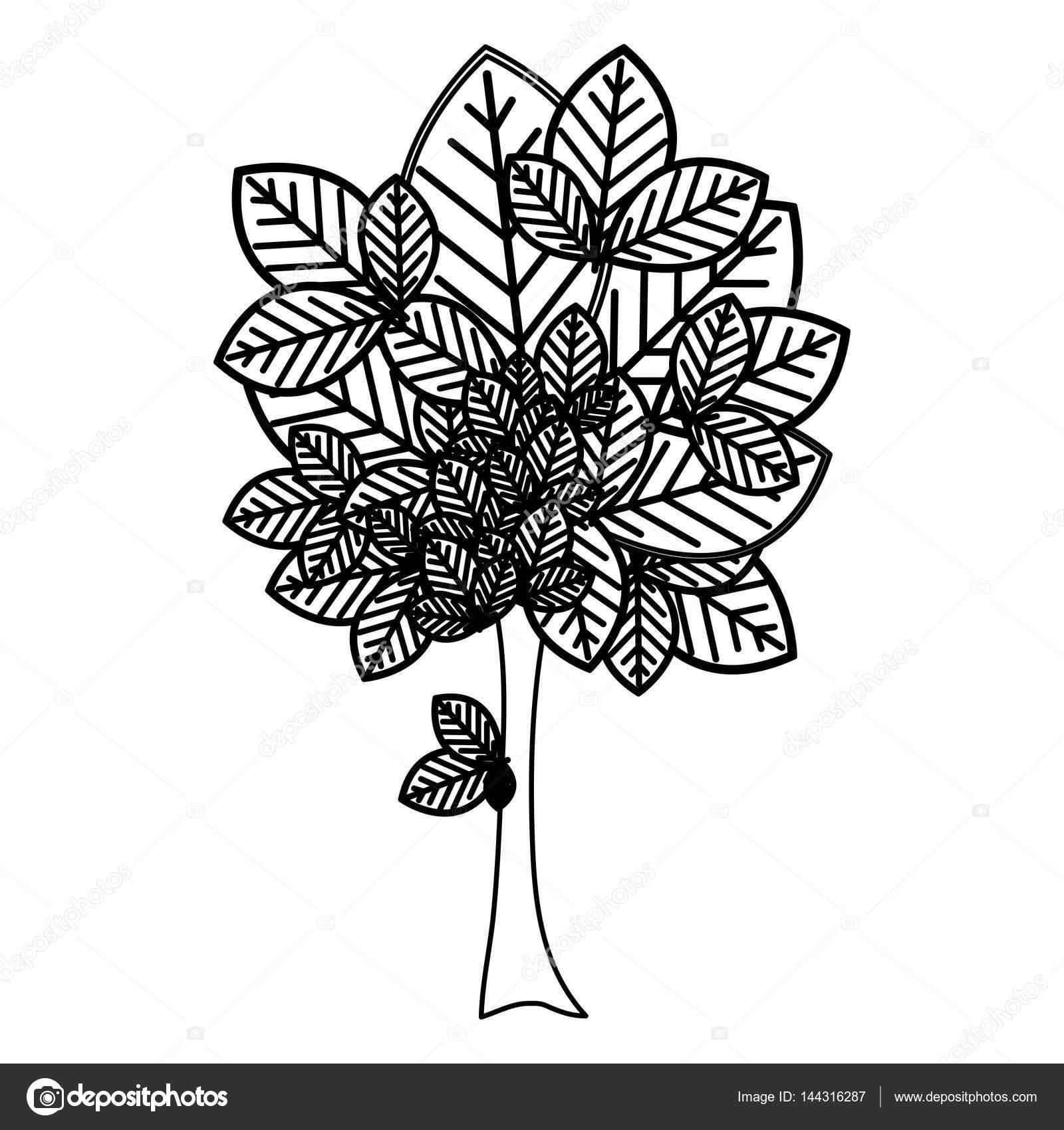 Dibujos Troncos De Arboles Para Pintar Silueta árbol