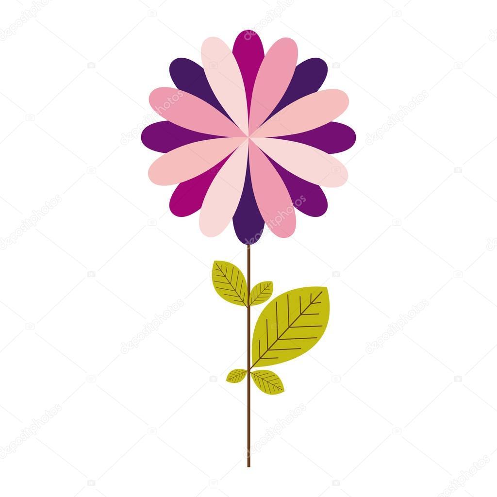 colorful silhouette with echinacea purpurea flower