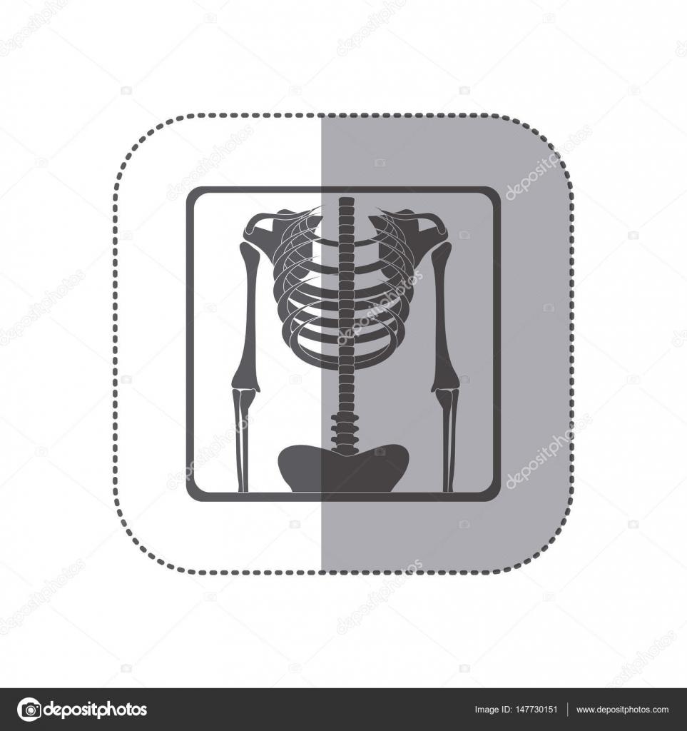 radiografía de esqueleto huesos etiqueta pictogramas monocromo ...