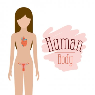 colorful silhouette female person with circulatory and reproductive system of human body