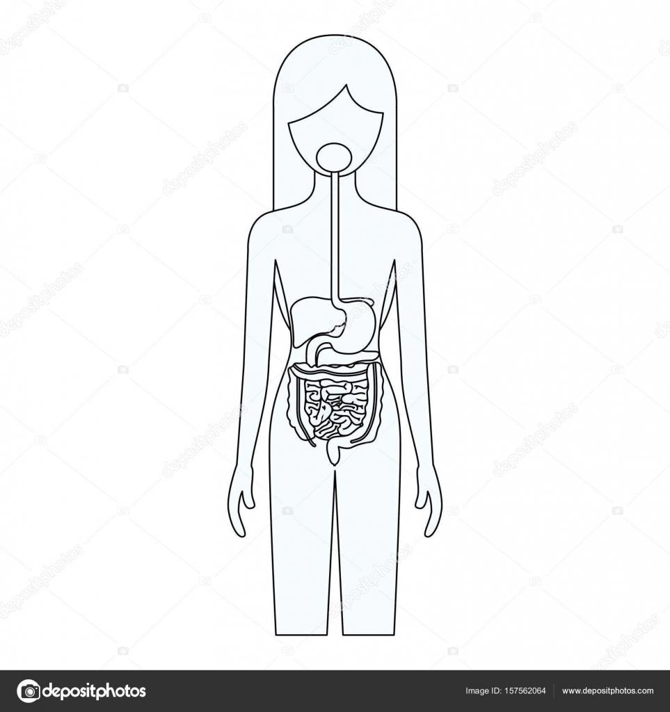 Skizzieren Sie Silhouette der weiblichen Person mit Verdauungssystem ...