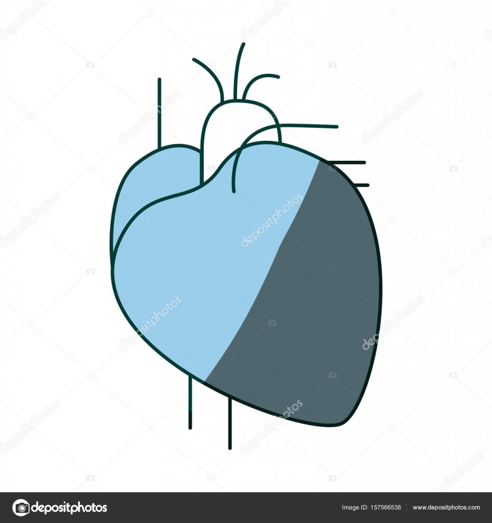 blaue Farbe schattieren Kontur Herz System menschlicher Körper ...