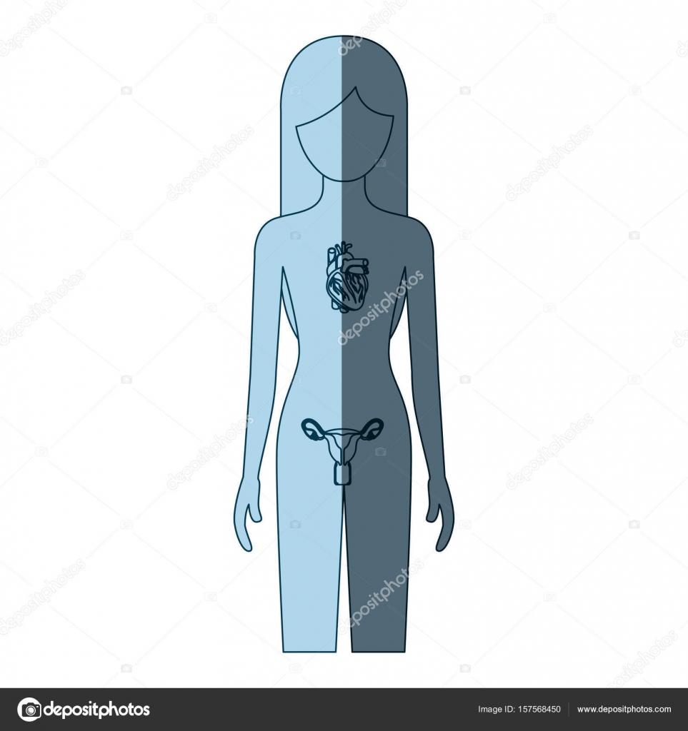 persona de sexo femenino de silueta de sombreado de color azul con ...