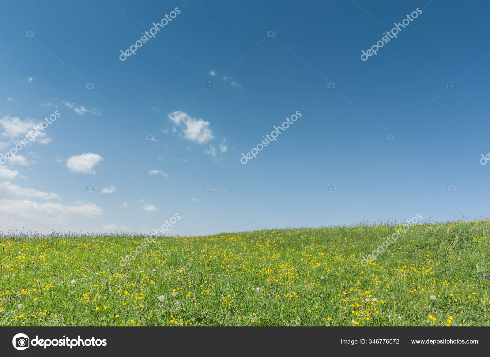 Colorful flower meadow with sky and clouds in spring
